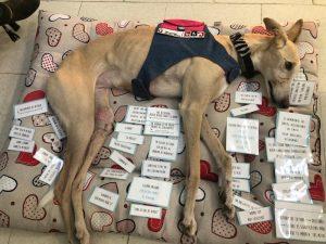 Nata perra Intervención Asistida con Animales
