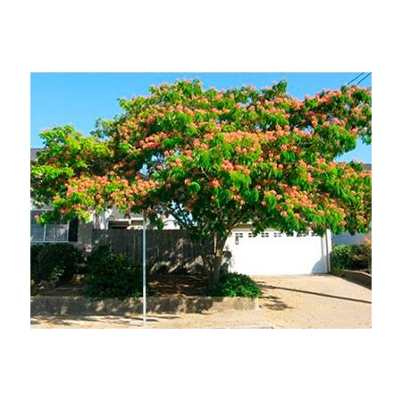 ODS URJC Plantación de 17 árboles en los campus de Alcorcón, Aranjuez y Vicálvaro